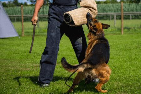 Man vs Dog für meinen JGA in Cracovie | Junggesellenabschied