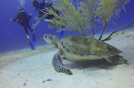 Ocean Cruise & Scuba Diving