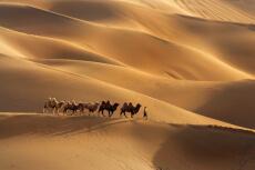 A dos de Chameaux pour mon EVG à Marrakech | Enterrement de vie de garçon | idée enterrement de vie de garçon | activité enterrement de vie de garçon | idée evg | activité evg