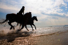 Balade à cheval  pour mon EVJF à Val de Loire | Enterrement de vie de jeune fille | idée evjf | idée enterrement de vie de jeune fille | activité evjf |activité enterrement de vie de jeune fille