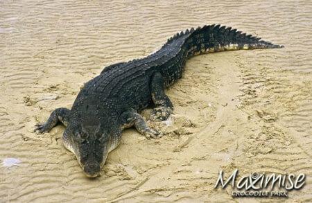 crocodile park spain