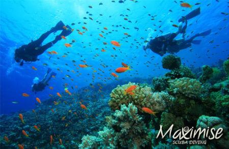 Hen Scuba Diving Benalmadena