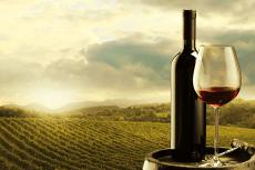 Weinbauer + Weinverkostung  für meinen JGA in Valence | Junggesellenabschied